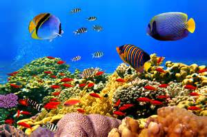 What Colors Affect Mood underwater reef tropical ocean coral fishes rjc4