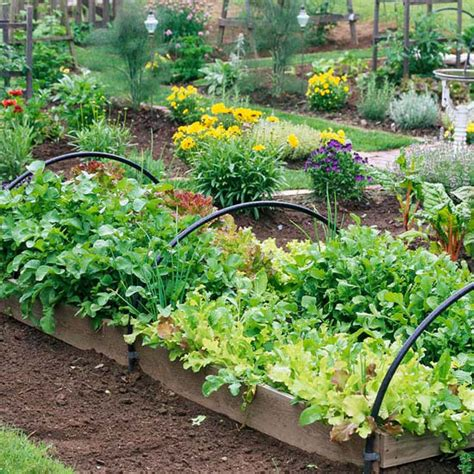 Vegetable Gardening New Home Interior Design Grow A Vegetable Garden In