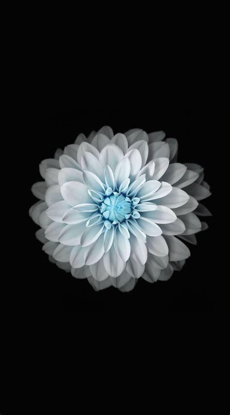 wallpaper flower iphone hd flower black and white wallpaper sc iphone6splus