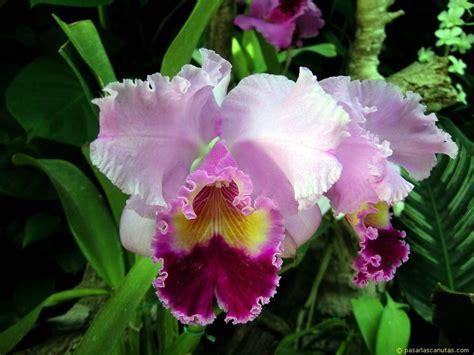imagenes hermosas de orquideas fotos de flores orquideas
