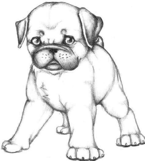 coloring pages of pugs dogs coloring style and folk on