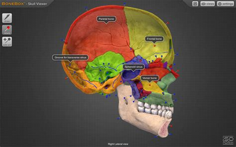 anatomy coloring book app bonebox skull viewer android apps on play