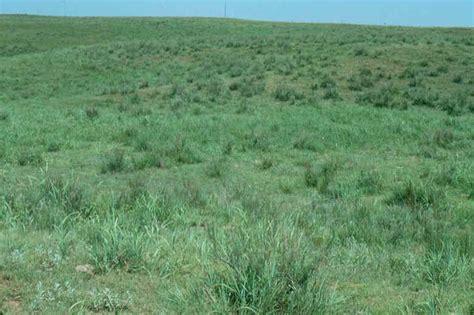 tiny plains grassland slides range types of north america
