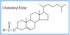 esteres de colesterol cholesterol ester images search