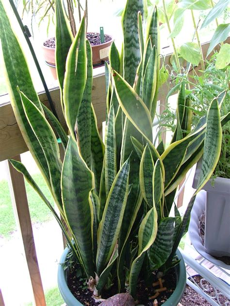 plants for home house plants identify by pic tropical plants that grow