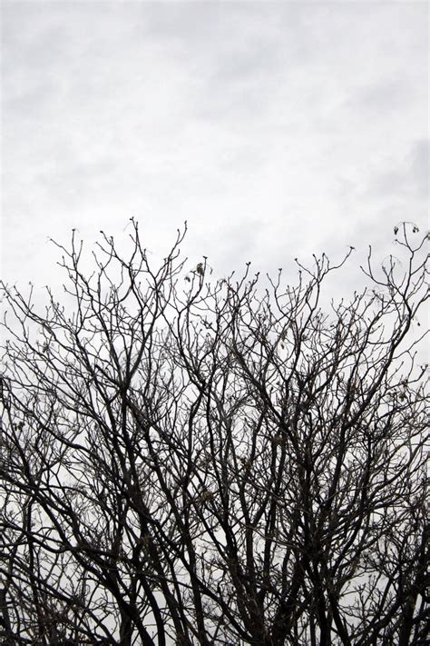 bare branch tree bare tree branches stock 1 by croicroga on deviantart