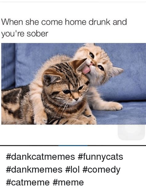 Drunk Cat Meme - when she come home drunk and you re sober dankcatmemes