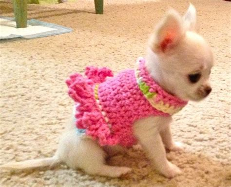 puppies in baby clothes best 25 chihuahua clothes ideas on pet clothes buy a kitten and chihuahuas