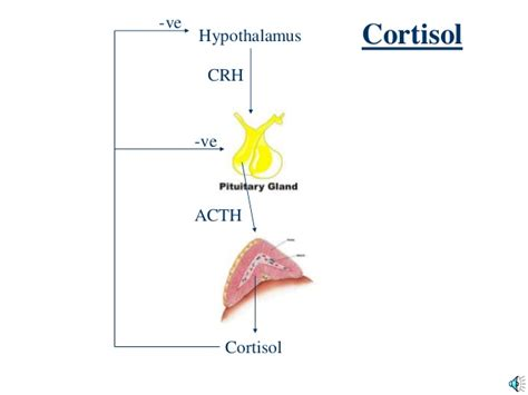 Cortisol Detoxing by Cushing S And S Disease