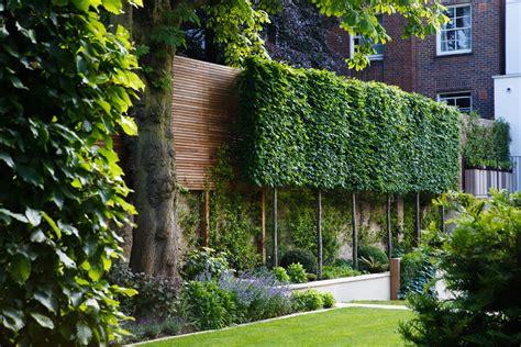 Garden Hedging Ideas Quercus Ilex Hedging Search Garden Pinterest Search Gardens And