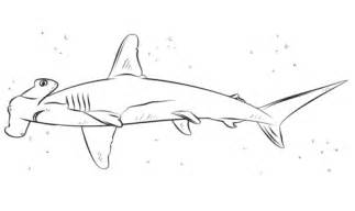 the most incredible hammerhead shark coloring page with