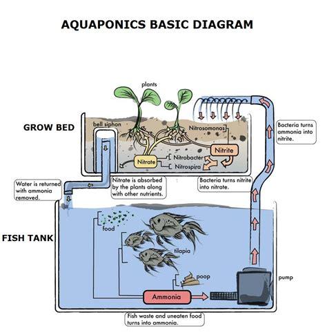aquaponics diagram aquaponics how to