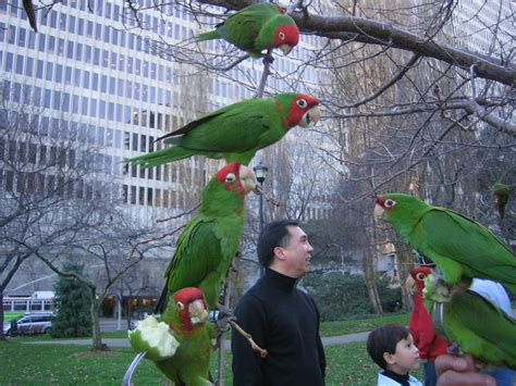 the parrots of telegraph hill laundry