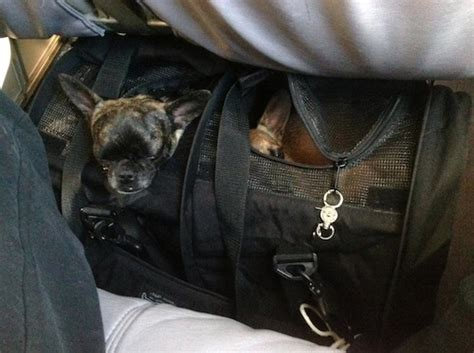 Delta Pet In Cabin by Reader S Report Flying With Two Dogs In A Divided Carrier