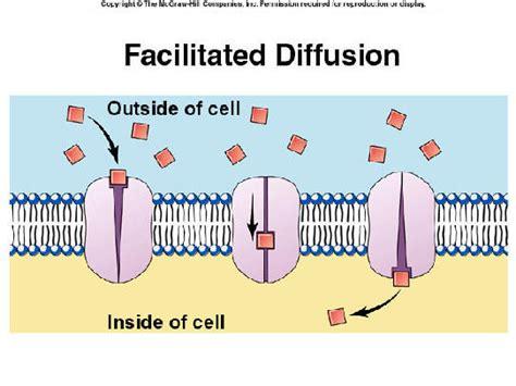 2 proteins in facilitated diffusion bioap ch7 collaboration