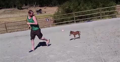 polsterei in der nähe tiniest that can t stop chasing his human