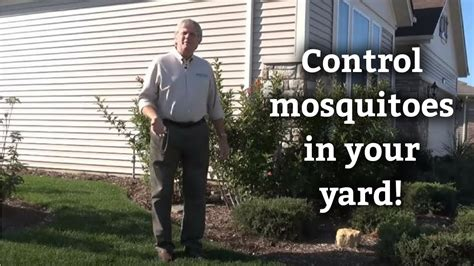 controlling mosquitoes in backyard mosquito control tips expert lawn yard care advice