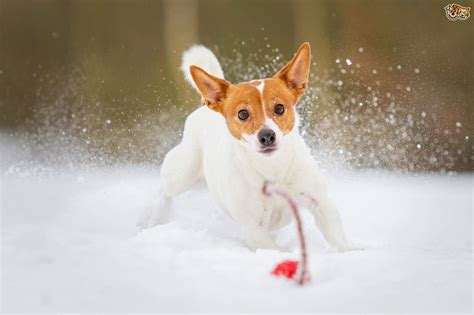 hypothermia in dogs recognising hypothermia in dogs pets4homes