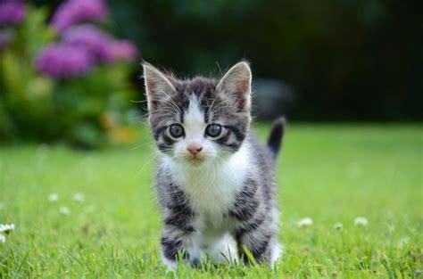 un gato y un 191 a qu 233 edad adoptar un gato mascotas