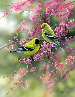 immagini fiori animati capricci animati immagini uccellini tra i fiori