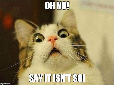 Oh No Meme - scared cat meme imgflip