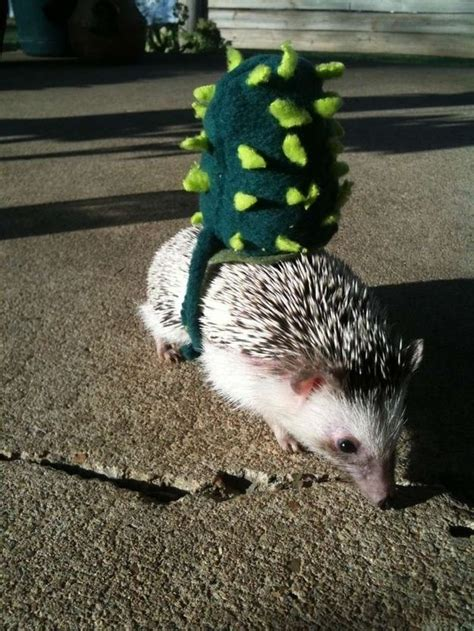 dress  hedgehog  halloween