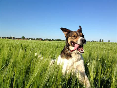 and in a puppy my happy in the field aww