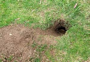 How To Get Rid Of Skunk In Backyard How To Get Rid Of Gophers Bob Vila
