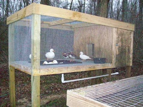 ideas  duck pens  pinterest duck coop