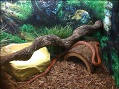 setter decorator python 7 best images about snake enrichment ideas on pinterest