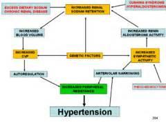 pathophysiology of hypertension flowchart 6 best images of hypertension blood flow chart blood