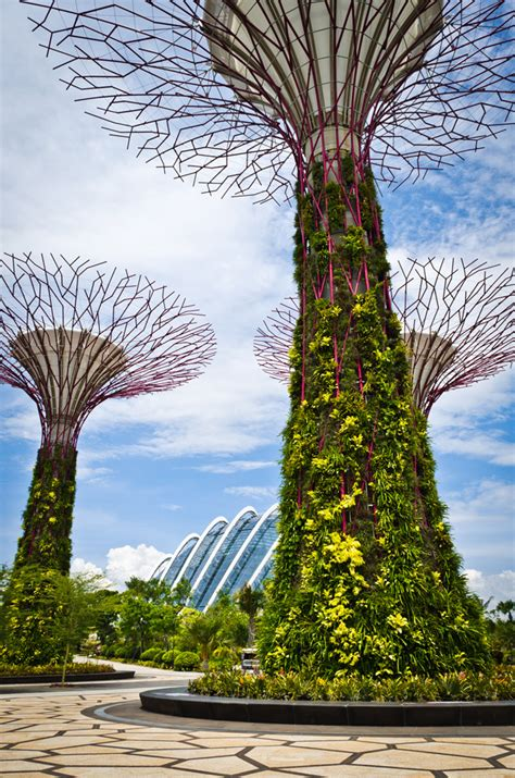 Singapore Vertical Garden Photos Singapore S Supertrees Solar Powered Vertical Gardens