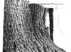 bark pattern drawing tree trunk pattern drawing www pixshark com images