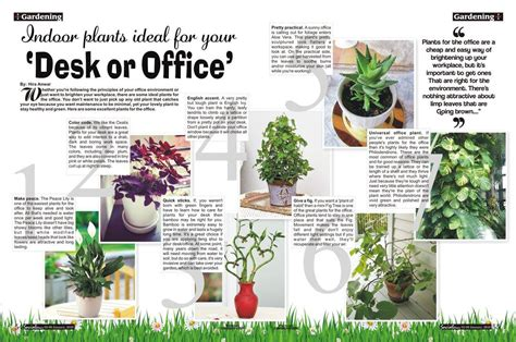 good desk plants 7 indoor plants ideal for your desk or office social diary