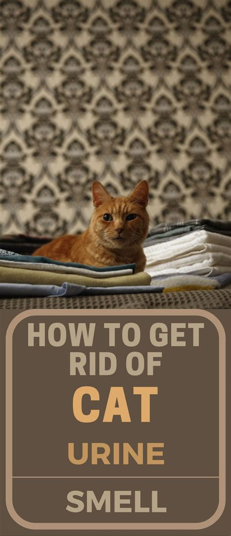 how to get rid of pee smell on bed 25 best ideas about cat urine on pinterest pet spot