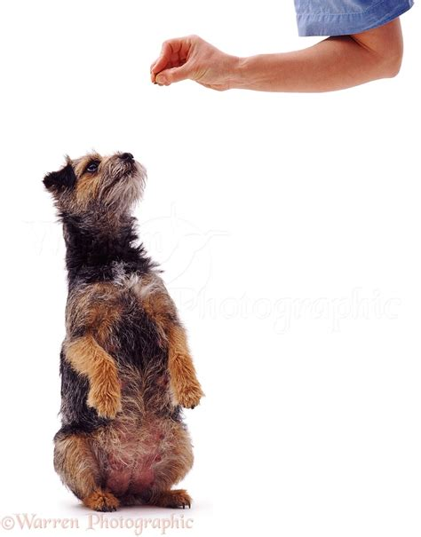 Dog getting a treat photo WP05994
