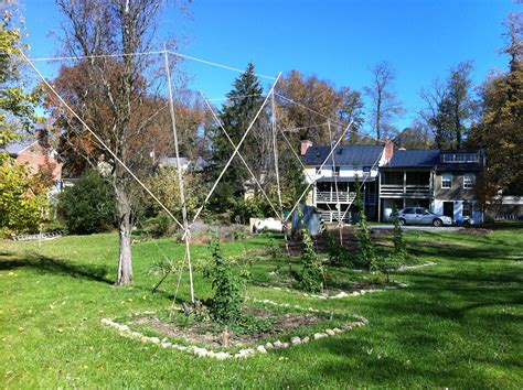 How To Make Trellis For Climbing Plants Growing Hops Part I Crooked Run Brewing