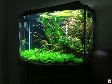 aquascape ottawa the 25 best bow front aquarium ideas on pinterest fish