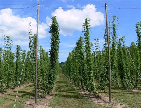 specialty cropportunities hops