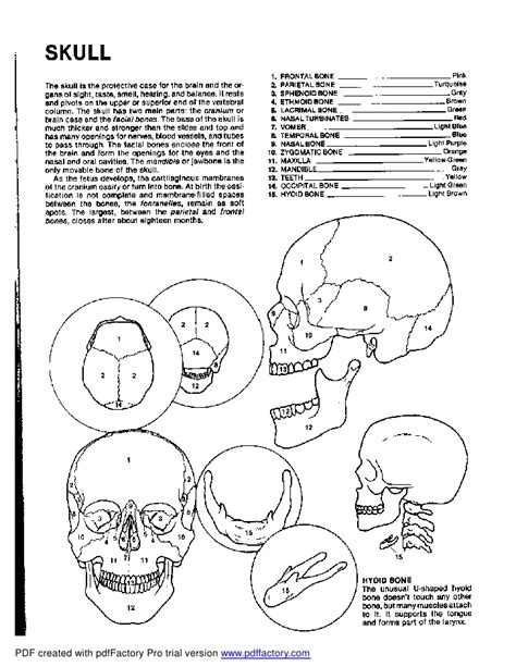 kapit anatomy coloring book free kapit anatomy coloring book pdf coloring pages