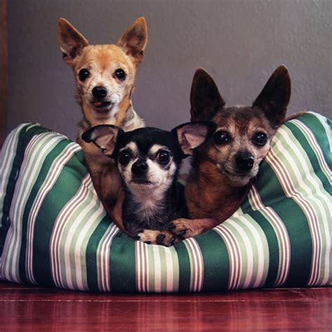 how to clean dog bed tips for cleaning dog beds