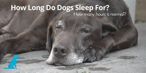 how many hours a day do dogs sleep how many hours a day do dogs sleep