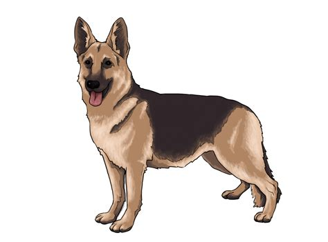 real pet dogs how to draw a real 10 steps with pictures wikihow litle pups