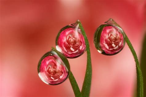 Wallpaper Bunga 541 by Mind Boggling Water Drop Reflections 13 Photos My