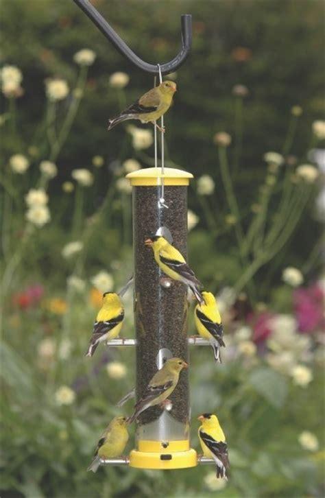 fcas birdfeeding presentation