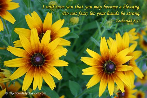 Stealing Eternity sunflower bible quotes quotesgram
