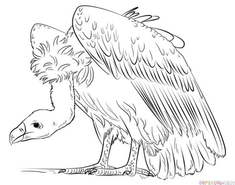 how to draw a vulture step by step drawing tutorials