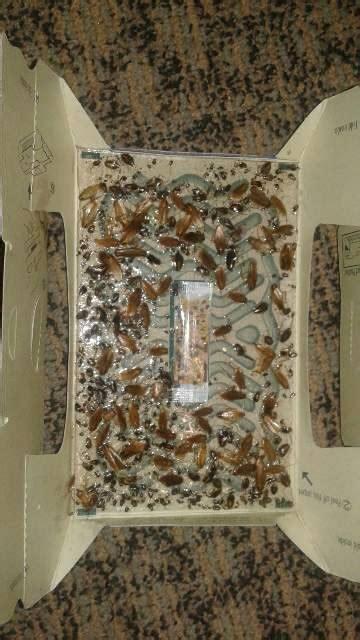 Perangkap Kecoak jual perangkap jebakan kecoa trap a roach hoy hoy toko