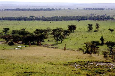 best safari park serengeti crowned africa s best safari park infinite