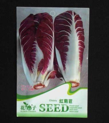 20 Benih Biji Bunga Blue Chicory benih chicory 30 biji retail asia bibitbunga